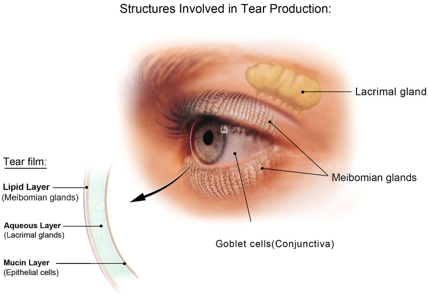 Tear Production