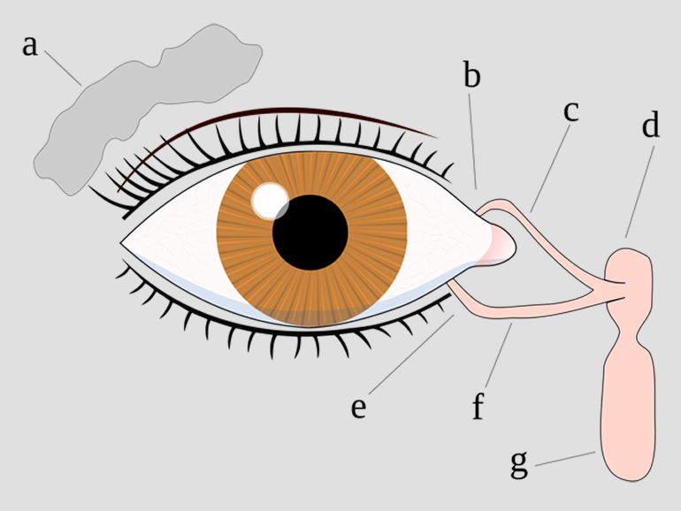 Tear System Diagram